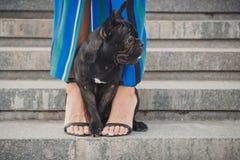Schwarzer Welpe der französischen Bulldogge, der auf Treppe zwischen weiblichen Beinen sitzt stockbild