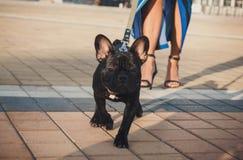 Schwarzer Welpe der französischen Bulldogge, der in die Straße geht stockfoto