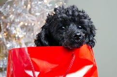 Schwarzer Welpe im roten Geschenkbeutel Stockbilder