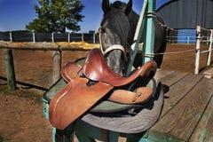 schwarzes arabisches Pferd hat lange Mähne, Sattel und Stall lizenzfreie stockfotos