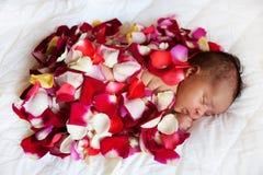 Schwarzes Babyschlafen umfasst durch rosafarbene Blumenblätter Stockfotografie