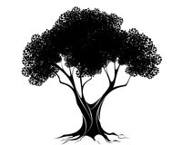 Schwarzes Baumschattenbild lizenzfreie abbildung