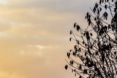 Schwarzes Baumschattenbild mit Sonnenuntergang Stockfotos