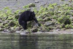Schwarzes betreffen einen Strand, der einen Felsen dreht Stockfotografie