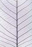 Schwarzes Blattadermuster Stockbild