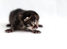 Schwarzes blindes Kätzchen auf einem weißen Hintergrund Lizenzfreie Stockfotografie