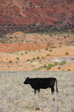 Schwarzes Bull stockbilder
