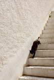 Schwarzes cat3 stockfoto