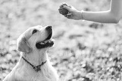 Schwarzes es-weiß Foto des Hundes Stockfoto