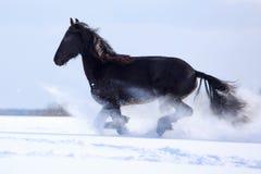 Schwarzes friesisches Pferd Lizenzfreies Stockbild