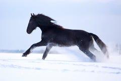 Schwarzes friesisches Pferd Lizenzfreies Stockfoto