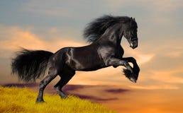 Schwarzes friesisches Pferd galoppiert auf den Hügel Stockbild