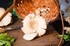 Schwarzes Holztischschneidebrett der Pilze Stockbilder