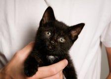 Schwarzes Kätzchen Lizenzfreie Stockfotos