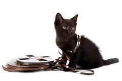 Schwarzes Kätzchen stockfotos