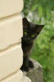 Schwarzes Kätzchen Lizenzfreies Stockfoto