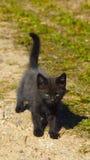 Schwarzes Kätzchen Stockbild