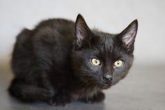 Schwarzes Kätzchen Stockfoto