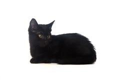 Schwarzes Kätzchen auf einem weißen Hintergrund, lokalisiert lizenzfreies stockfoto