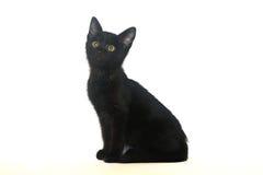 Schwarzes Kätzchen auf einem weißen Hintergrund, lokalisiert lizenzfreie stockfotografie