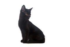 Schwarzes Kätzchen auf einem weißen Hintergrund, lokalisiert Stockbild