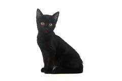 Schwarzes Kätzchen auf einem weißen Hintergrund, lokalisiert stockbilder