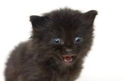 Schwarzes Kätzchen auf weißem Hintergrund stockbilder