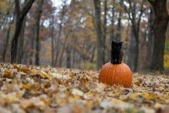 Schwarzes Kätzchen, das auf Kürbis im Wald sitzt lizenzfreies stockfoto