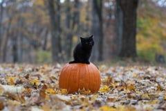 Schwarzes Kätzchen, das auf Kürbis im Wald sitzt lizenzfreie stockbilder