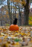 Schwarzes Kätzchen, das auf pumplin im Wald sitzt stockfotografie