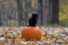 Schwarzes Kätzchen, das auf pumplin im Wald sitzt lizenzfreie stockfotografie