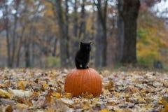 Schwarzes Kätzchen, das auf pumplin im Wald sitzt stockbild