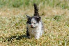 Schwarzes Kätzchen, das in grünes Gras geht stockfotos
