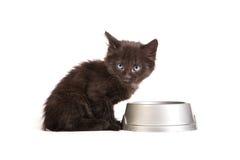 Schwarzes Kätzchen, das Katzenfutter auf einem weißen Hintergrund isst Lizenzfreie Stockbilder