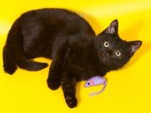 Schwarzes Kätzchen, das mit Spielwaren auf Gelb liegt Stockbilder