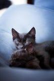 Schwarzes Kätzchen, das Uhr hält Stockfotografie