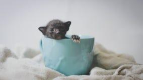 Schwarzes Kätzchen in der blauen Schale Stockfotografie
