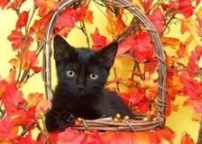 Schwarzes Kätzchen der getigerten Katze im Korb mit orange Blättern Stockbilder