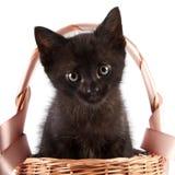 Schwarzes Kätzchen in einem wattled Korb mit einem Farbband stockbilder