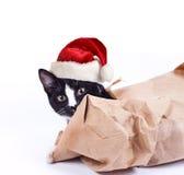 Schwarzes Kätzchen in einer Kappe Lizenzfreie Stockfotografie