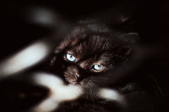 Schwarzes Kätzchen hinter Gittern Lizenzfreie Stockfotos