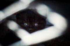 Schwarzes Kätzchen hinter Gittern Stockbilder