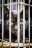 Schwarzes Kätzchen hinter Gittern Stockfoto