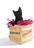 Schwarzes Kätzchen im Geschenkkasten Stockbilder