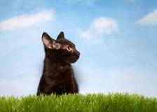 Schwarzes Kätzchen im Gras Stockbild
