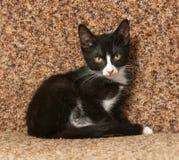 Schwarzes Kätzchen mit den weißen Stellen, die auf Couch sitzen Stockfoto