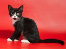 Schwarzes Kätzchen mit den weißen Stellen, die auf Rot sitzen Lizenzfreies Stockfoto