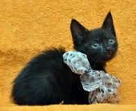 Schwarzes Kätzchen mit einem Bogen Lizenzfreies Stockfoto