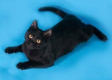 Schwarzes Kätzchen mit orange Augen liegt auf Blau Lizenzfreies Stockbild