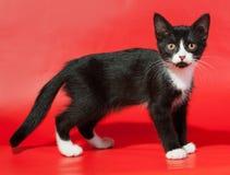 Schwarzes Kätzchen mit weißen Stellen steht auf Rot Stockfotos